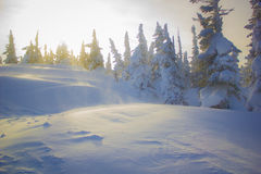 sibéria Imagens de Stock Royalty Free