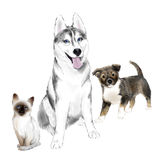Sibérien adulte Husky Dog, chiot et chaton Illustration de Vecteur