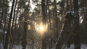Siberië, staat, het bevriezen, pool, breedte, reis stock footage