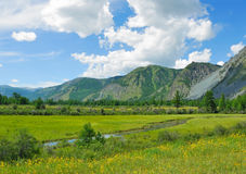 Siberia. Altai. View on green valley. Green mountains, blue sky, yellow flowers, calm small river stock photos
