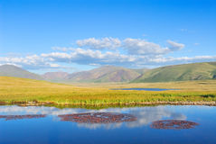 Siberia. Altai. View on mountain valley. Siberia. Altai. View on green valley. Green mountains, blue sky, yellow grass, calm blue water of a small lake with stock images