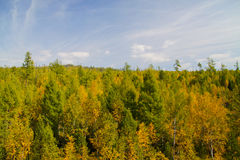 Siberia in autumn Royalty Free Stock Photo