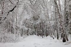 siberia Camino en bosque del abedul en invierno Imagen de archivo