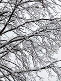 siberia för stadsdecember novosibirsk park snowstorm 2006 Fotografering för Bildbyråer