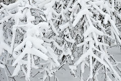 siberia för stadsdecember novosibirsk park snowstorm 2006 Royaltyfria Bilder