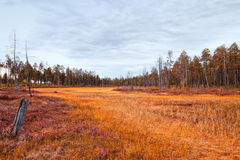 Siberia forest.Yamal Stock Photo