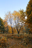 Siberia forest.Yamal Royalty Free Stock Image