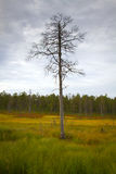 Siberia forest Royalty Free Stock Photos