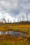 Siberia forest Stock Photos