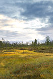 Siberia forest Royalty Free Stock Photo