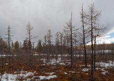 Siberia nature in May royalty free stock photography