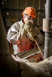 Siberia, Russia - moulting gold Stock Images