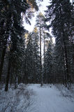 Siberia Royalty Free Stock Photography