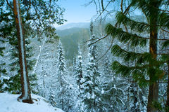 Siberia winter landscape snow hill and tree Royalty Free Stock Photography