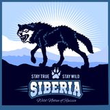 Siberia - a wolf on the background of the plain of Russian Siberia Stock Image