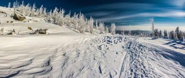 siberian зима Стоковое фото RF
