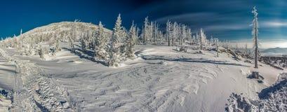 siberian зима Стоковое Изображение