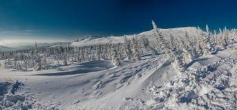 siberian зима Стоковые Изображения