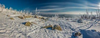 siberian зима Стоковые Фото