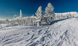 siberian зима Стоковая Фотография