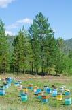 Siberian bee garden Royalty Free Stock Photos