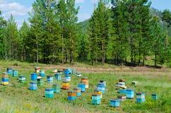 Siberian bee garden Stock Image