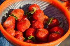 Siberian berry Royalty Free Stock Image