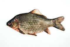 Siberian carp. Isolated on white Stock Photo
