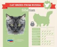 Siberian Cat breed infographics royalty free illustration