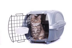 Siberian cat in carrying Stock Image