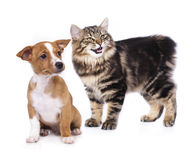 Siberian cat and  puppy Royalty Free Stock Photos