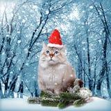 Siberian cat in santa cap Royalty Free Stock Images