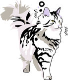 Siberian cat Royalty Free Stock Photo