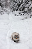 Siberian cat in winter forest Royalty Free Stock Photography
