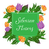 Siberian flowers vector illustration with a frame Stock Photo