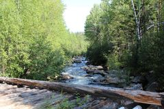 Free Siberian Forest. Bridge Over The Fast River. Birch And Pine Forest. Stock Photos - 131757873