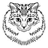Siberian furry cat muzzle Royalty Free Stock Image