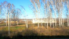 Siberian höstlandskap lager videofilmer