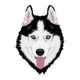Siberian husky dog. Black and white Siberian husky with blue eyes and sticking out tongue. Hand drawn portrait of dog. Vector illustration stock illustration