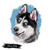 Siberian Husky dog hound with clear eyes digital art. Animal watercolor portrait closeup isolated muzzle of pet, canine. Hand drawn clipart, animalistic drawing vector illustration