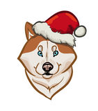 Siberian husky holiday portrait Royalty Free Stock Image