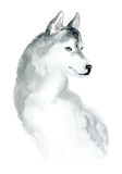 The Siberian husky. Image of a thoroughbred dog. Watercolor painting Royalty Free Stock Images