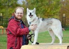 Siberian Husky with a man Stock Image