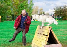 Siberian Husky with a man Stock Photos