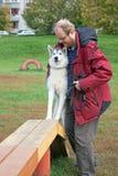 Siberian Husky with a man Stock Images