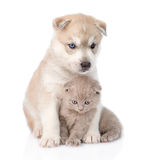 Siberian Husky puppy hugging scottish kitten . isolated on white Royalty Free Stock Photography