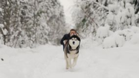 Siberian Husky runs in slow motion to the camera from the host, moving focus. Siberian Husky runs in slow motion to the camera from the host, moving focus stock footage