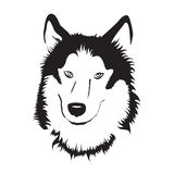 Siberian Husky. Stock Vector Illustration Royalty Free Stock Images