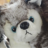 Siberian Husky Stuffed Animal Stock Photography
