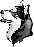 Siberian Husky. Vector drawing of the dog breed Siberian Husky Royalty Free Stock Photo